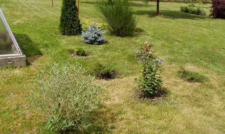 Rostliny náhodně rozeseté po trávníku ztěžují sekání