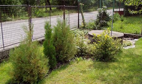 Tohle měl být původně plot, každá túje jiná, nehodí se k sobě s ostatními rostlinami