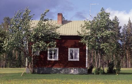 Stromy nasázené příliš blízko domu ve vzrostlém stavu stíní