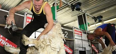 V Malhostovicích na Brněnsku se o víkendu konalo mistrovství ve stříhání ovcí
