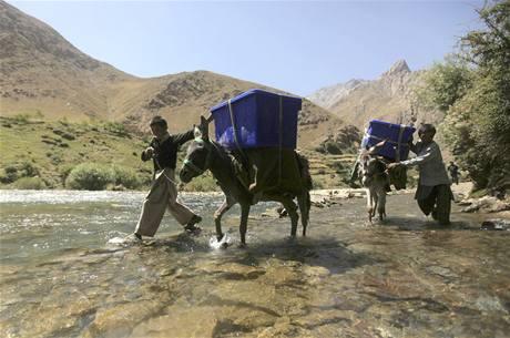 Volební urny převáží v Afghánistánu 3100 oslů