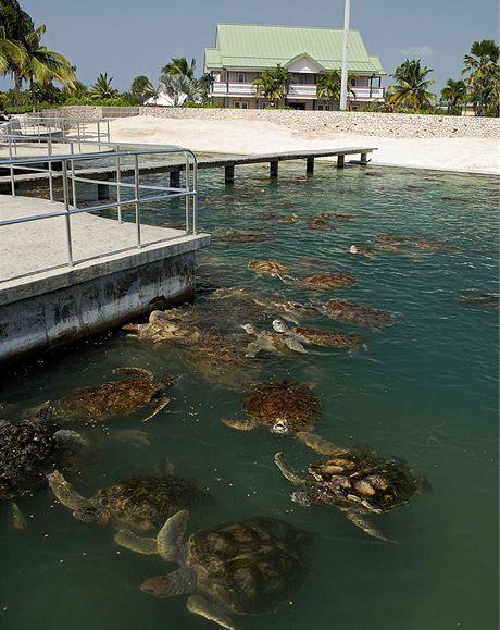 Kajmanské ostrovy, želví farma