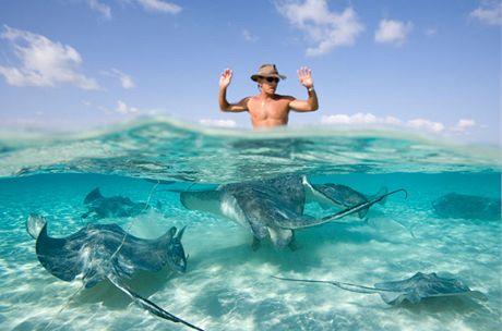 Kajmanské ostrovy, plavání s rejnoky - Stingray City