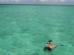 Kajmanské ostrovy, plavání s rejnoky