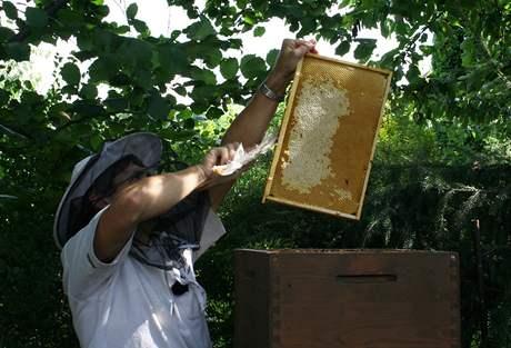Rámek , ze kterého chcete stáčet med, musíte nejprve zbavit včel