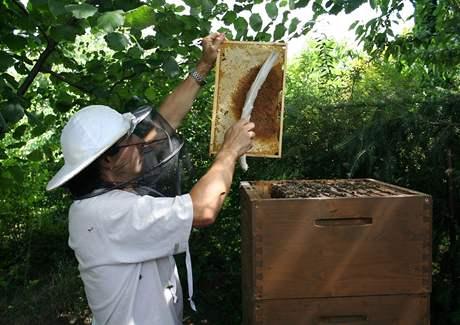 Rámek, ze kterého chcete stáčet med, musíte nejprve zbavit včel