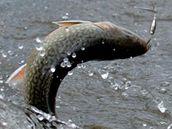 Chytání ryb na Lipně.