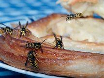 Na vosy pozor i při jídle, s oblibou sedají na rozjedené ovoce nebo sladkosti