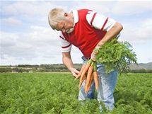 Farmář pěstující mrkev