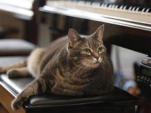 Ko�i�� klav�ristka Nora