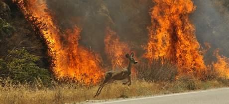 Lesní požáry v Kalifornii (30. srpna 2009)