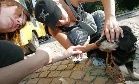 Pojízdná zubní ordinace pro psy ordinovala v Lužáneckém parku v Brně.