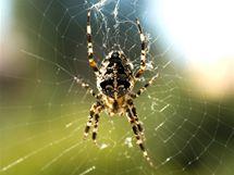 Podle amerických vědců mají ženy strach z pavouků zakódovaný v genech