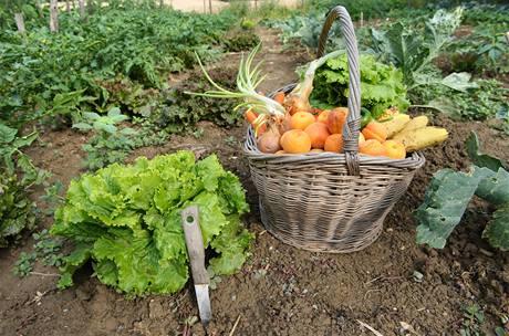 Vypěstovat si vlastní bio ovoce a zeleninu zase není takový problém, stačí vědět, jak na to