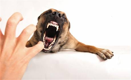 Agresivní pes