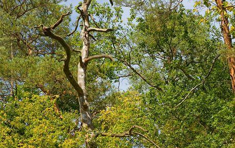 Křivoklátsko, Údolí ticha. Kouzlo smíšených lesů vynikne s přicházejícím podzimem