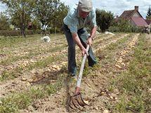 Na ekologické pěstování si musíte vybrat odrůdy, které jsou sice méně výnosné, ale odolné vůči škůdcům a plísním