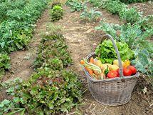 Odměnou zanícenému ekopěstiteli je chutné zdravé ovoce a zelenina