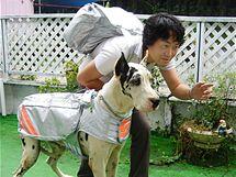KPZ pro psího miláčka v praxi. Stylově sladěný může být i majitel (Japonsko)