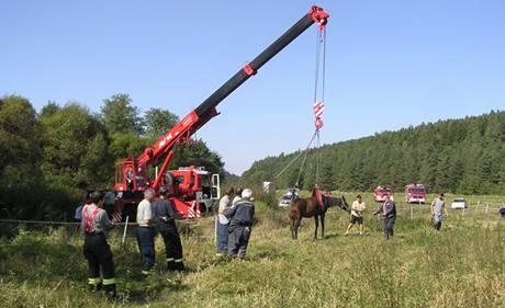Hasiči zachránili čtyřletou kobylu