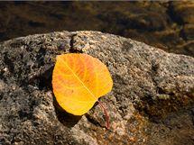 Spadané barevné listí sice má svůj půvab, do jezírka ale nepatří. Mohlo by tam způsobit kalamitu