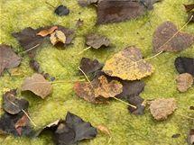 Spadané listí může v jezírku způsobit kalamitu