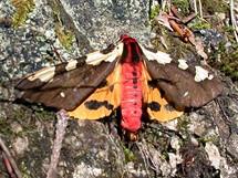 Slovensko, Súľovské skály - motýl