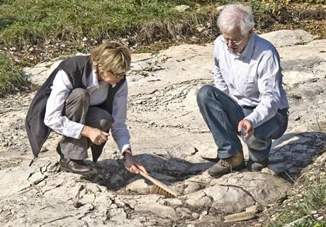 Stopy dinosaurů staré 150 milionů let objevili vědci ve východní Francii.