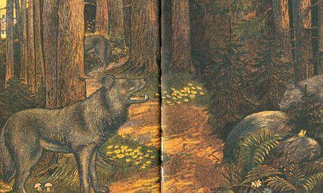 Vlci z nové knihy Ireny Douskové.