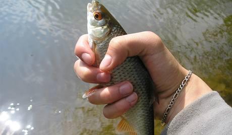Nesahat na ryby suchýma rukama