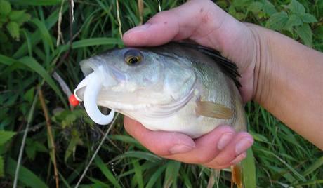 Odstraňovat háčky šetrně nejen u velkých ryb