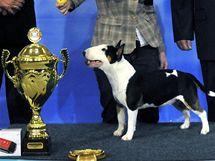 Nejhezčím juniorem světové výstavy psů World Dog Show 2009 se stal miniaturní bulteriér Estonky Helen Tonksonové-Koitové