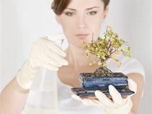 Žloutnoucí listy nemusejí znamenat nedostatek vody. Naopak, často signalizují, že rostlina má přemokřenou půdu a začaly jí uhnívat kořínky