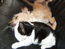 Kočky a psi roznášejí blechy po bytě - na pohovky nebo koberce