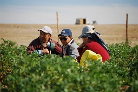 Oáza v poušti Gobi