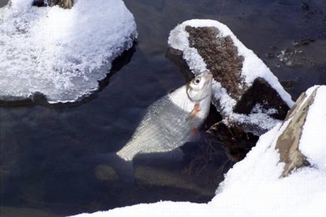 Zimní úlovek