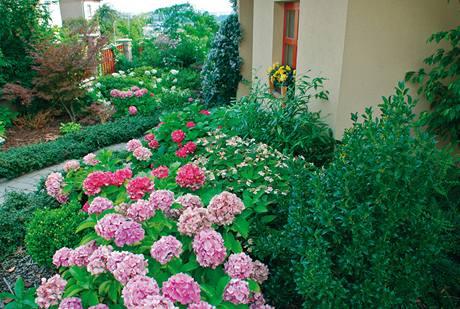 Mít v zahradě hortenzie bylo jedno z přání majitelů