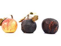 Na zahradě nelze sklízet jen zdravé plody, uklidit musíte i ty napadené chorobami
