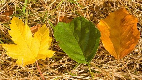 Podzim nab�z� mnoho tvar� a barev list�.