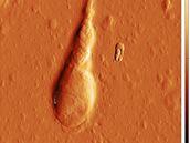 Brněnští vědci chtějí léčit neplodnost pomocí mikroskopu atomových sil
