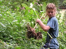 Netýkavky hustým zápojem ničí původní rostliny břehových porostů.