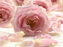 Výluh z podrcených okvětních plátků růží, ať už čerstvých nebo sušených, desinfikuje a zklidňuje zanícené sliznice.