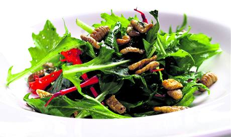 Smažené larvy