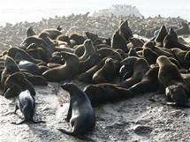 Jihoafrická republika. Kolonie lachtanů u Hout Bay, asi 20 km z centra Kapského Města