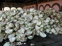 Mexiko, městečko Tequila. Když se očištěná agáve přiveze z pole, musí se dlouhé hodiny péct