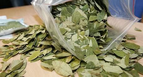 Zabavené listy koky, které do Brna dorazily z Peru
