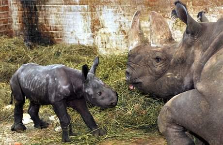 Nosorožci v královédvorské zoo (9. prosince 2009)