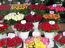 Polsko, Krakov. Není to jen krakovská specialita - v centru velkoměst bývají k dostání přímo na ulici nebo na náměstí nádherné květiny