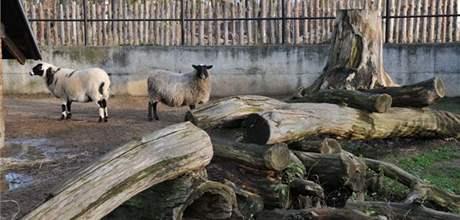 V hodonínské zoo by mohli lidé pozorovat nejen exotická zvířata, ale i ta, která žili a žijí v tuzemských lesích