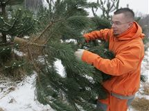 Na plantáži v Náchodě si lidé mohou vánoční stromky sami vybrat i uříznout.